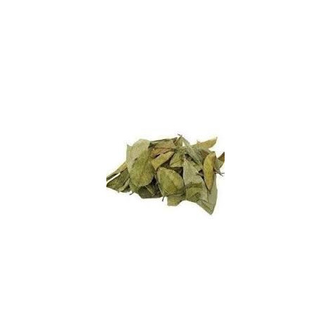 Graviola planta seca – Pamies vitae – 100 gr