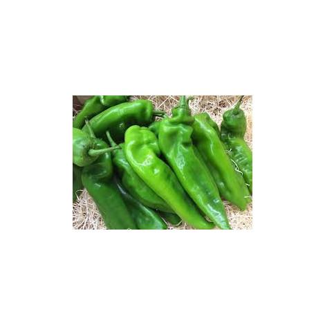 Pimiento verde - ITALIANO - Pidebio - kilo