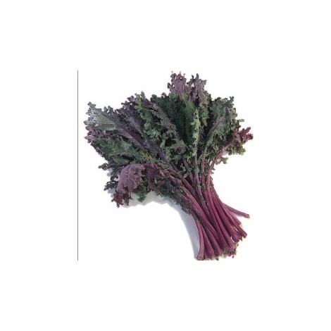 kale red- Bio Trailla- manojo