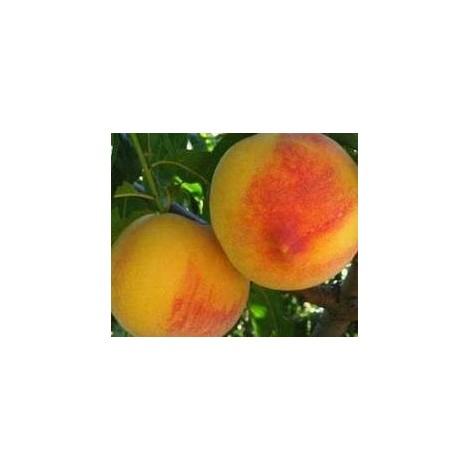 Melocotón Amarillo - Fruitalpuntbio- 1 kg