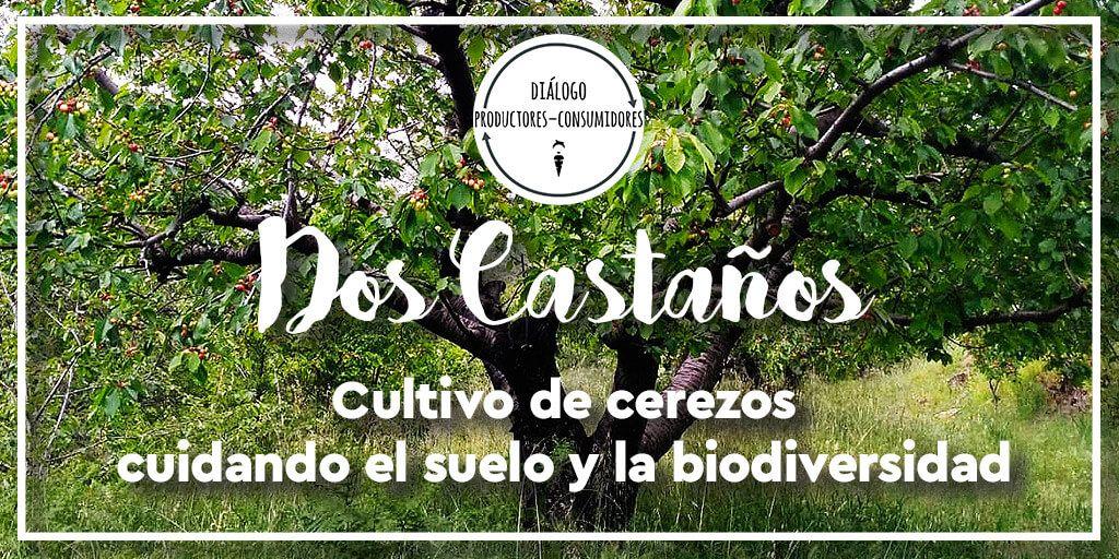 dos-castaños-cultivo-de-cerezos-cuidando-la-fertilidad-del-suelo-y-la-biodiversidad